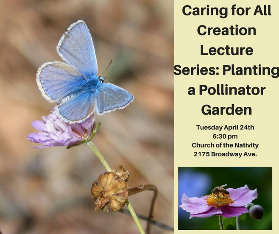 Caring for All Creation Lecture Series